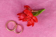 Two wedding rings and red flowers. For valentine`s day stock images