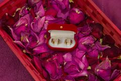 Two wedding rings on rose-petals Royalty Free Stock Image