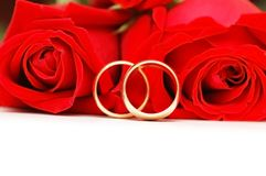 Two wedding rings and red rose. Two wedding rings and red  roses isolated on white Stock Photography