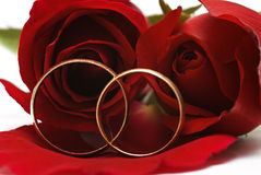 Two wedding rings and a red roses. Stock Photography
