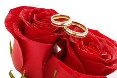 Two wedding rings and red roses Royalty Free Stock Images