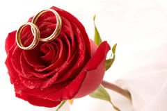 Two wedding rings and red roses Stock Photo