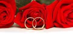 Two wedding rings and red  roses isolated on white Royalty Free Stock Image