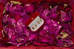 Two wedding rings on rose-petals Stock Photography