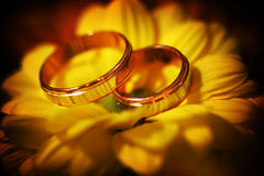 Two wedding rings on spring yellow flower. Royalty Free Stock Photo