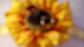 Two wedding rings on sunflower decoration.  stock footage