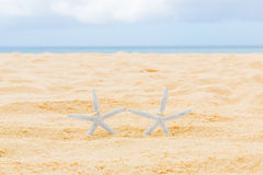 Two wedding rings with two starfish on a sandy tropical beach. W. Edding and honeymoon in the tropics Stock Image