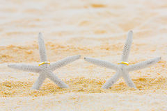 Two wedding rings with two starfish on a sandy tropical beach. W. Edding and honeymoon in the tropics Stock Photography
