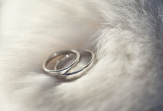 Two wedding rings on white fur. royalty free stock photos