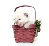 Two week old kitten in a basket Royalty Free Stock Image