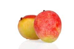 Two wet mango Royalty Free Stock Photos