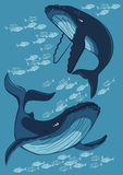 Two whale among fish. On a blue background, vector illustration Royalty Free Stock Photography