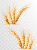 Two Wheat Ears Isolated. EPS 10 Stock Photography