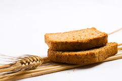 Two wheat toast Stock Image
