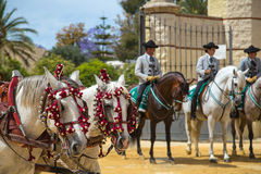 Two white andalusian horses with 3 jockeys to rearRegistrar versión: Royalty Free Stock Photo