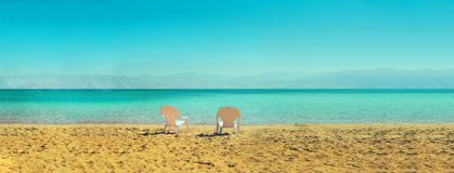 Two white beach chairs on seaside. Copy space. Summer, holiday and travel concept. Banner.  Stock Images