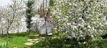 Two white Beehives of a suburban hobbyist apiarist used for the purpose of production of honey and pollination of nearby apple and stock image