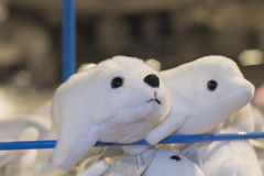 Two white beluga toy store. Toys on the shelf waiting for purchases royalty free stock image