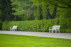 Two white benches against the bushes. Royalty Free Stock Photography