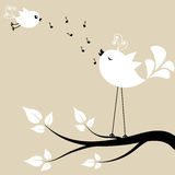 Two white birds on a branch Royalty Free Stock Photography