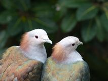 Two White-brown-and-green Birds Selective Focus Photography Stock Photos