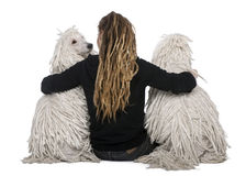 Two White Corded standard Poodles and a girl Royalty Free Stock Image