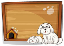 Two white dogs in front of a wooden board Royalty Free Stock Photo