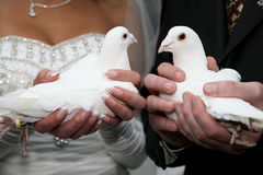 Two white dove in the hands of the bride and groom close up Royalty Free Stock Photo