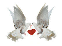 Two white doves holding red heart with their beaks Royalty Free Stock Photography