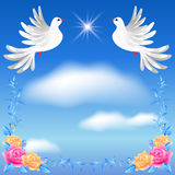 Two white doves in the sky Stock Images