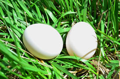 Two White Eggs Stock Images