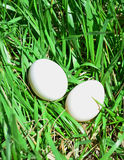Two White Eggs Royalty Free Stock Image