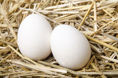 Two white eggs lie in the straw Royalty Free Stock Images