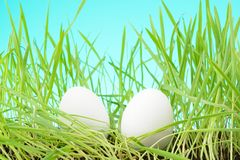 Two white eggs among tall grass. Grass royalty free stock photography
