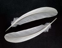 Two white feather on black background. Close up two white feather on black background Stock Photo