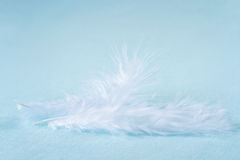 Two white feathers on light blue linen background Royalty Free Stock Photography