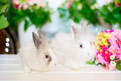Two white fluffy rabbit on the bench Royalty Free Stock Photography