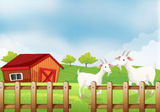 Two white goats at the farm Royalty Free Stock Photo