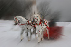 Two white horses. In park Kolomenskoye. Moscow, Russian Federation royalty free stock photos