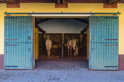 Two white horses in the stable Royalty Free Stock Images