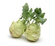 Two White kohlrabi Royalty Free Stock Photos