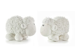 Two White Lambs Royalty Free Stock Photo