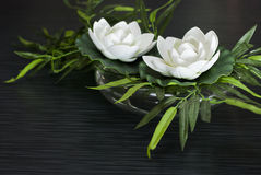 Two White lotus flowers Stock Image