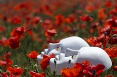 Two white masks lying in a field of red poppies Royalty Free Stock Images