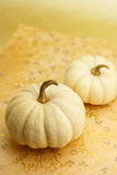 Two white miniature pumpkins Royalty Free Stock Image