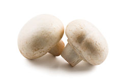 Two white mushrooms Royalty Free Stock Photo
