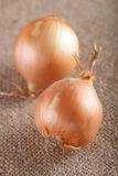 Two white onions bulb on brown hessian rustic Stock Photo