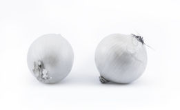 Two white onions on a white background - front view Royalty Free Stock Photo