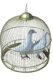 Two white pigeon in cage Stock Photos