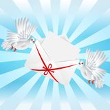 Two white a pigeon is carried envelope Royalty Free Stock Images